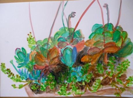 24_02_succulents